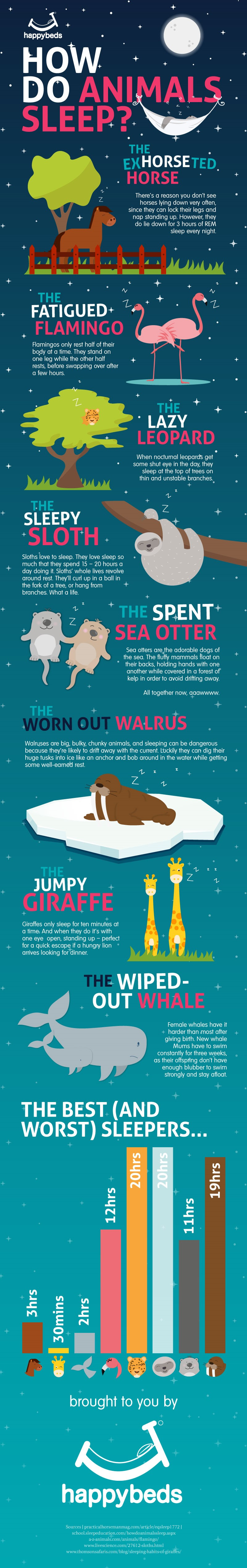 Animal Sleep Infographic
