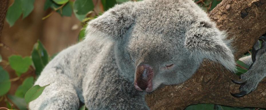 World Sleep Day: 15 Sleepy Animal Pics You Can't Go Without