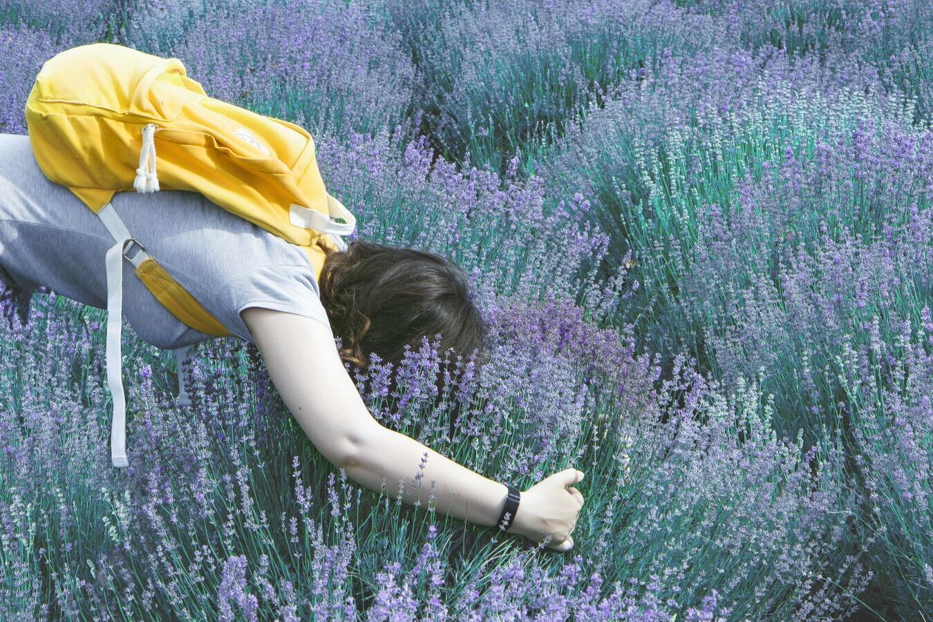 Person Smelling Lavender Plant